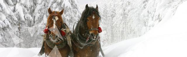 horseride-banner